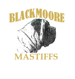 Blackmoore Mastiffs